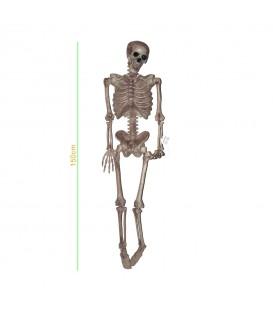 Esqueleto 120cm